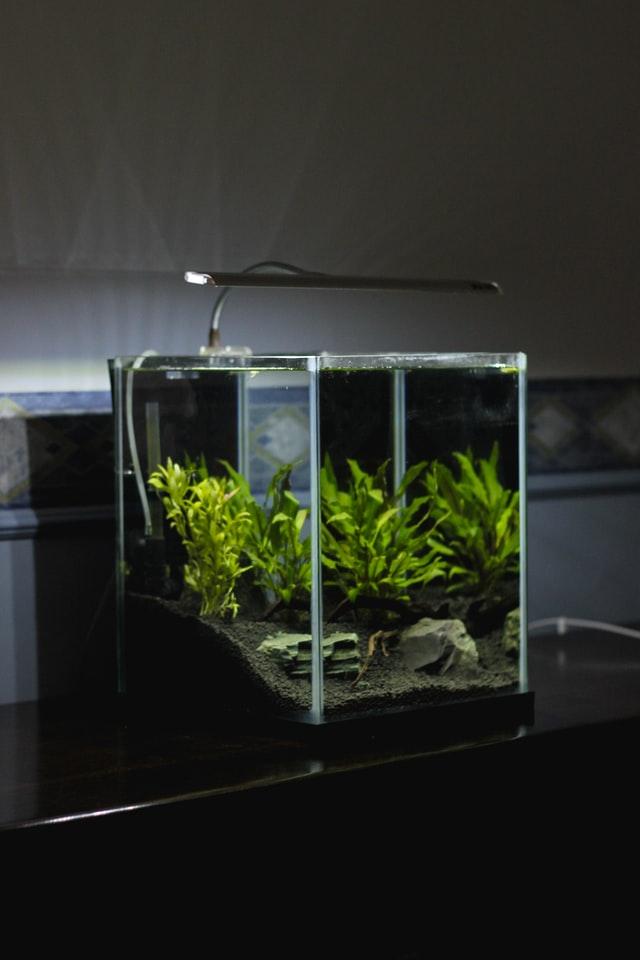 Smart Home Steckdose als Steuerung einer Aquariumbeleuchtung